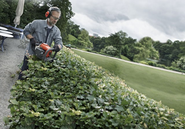 The professional's guide to trimming hedges